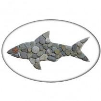 Shark – PW